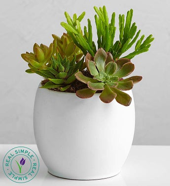 Succulent Garden by Real Simple®