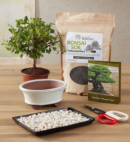 Bonsai Kit