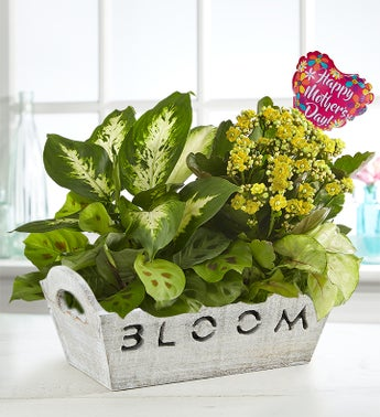 Bloom Dish Garden for Mom