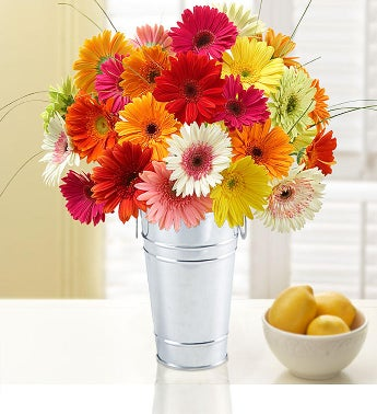 Happy Gerbera Daisies  Free Shipping